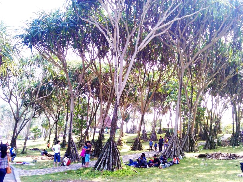 Bersantai di bawah lindungan. pohon - pohon Pandan Wong