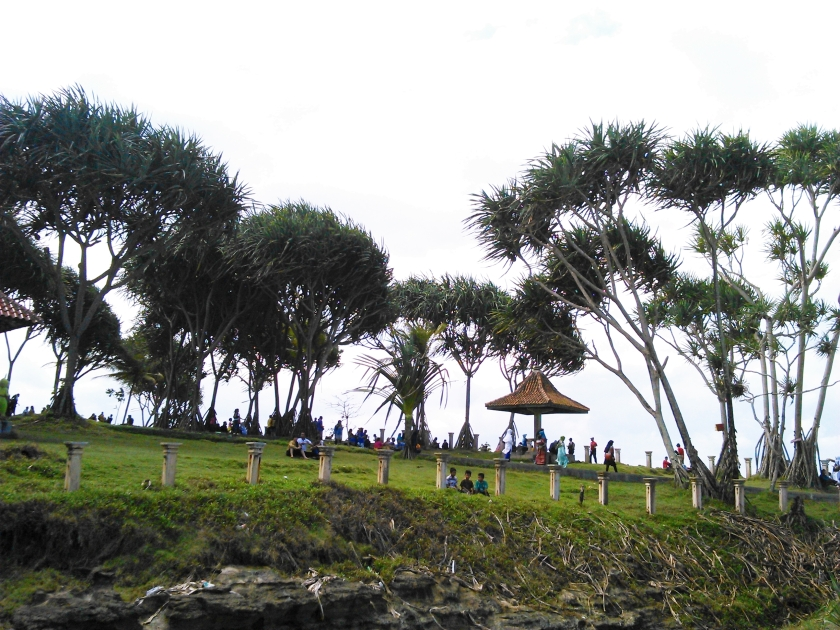 Deretan pohon - pohon Pandan Wong